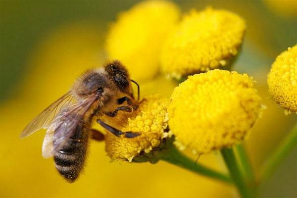 Sonhar com abelha em uma flor